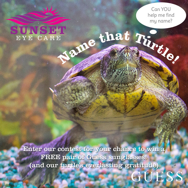 Sunset Eye Care's pet turtle Shelley