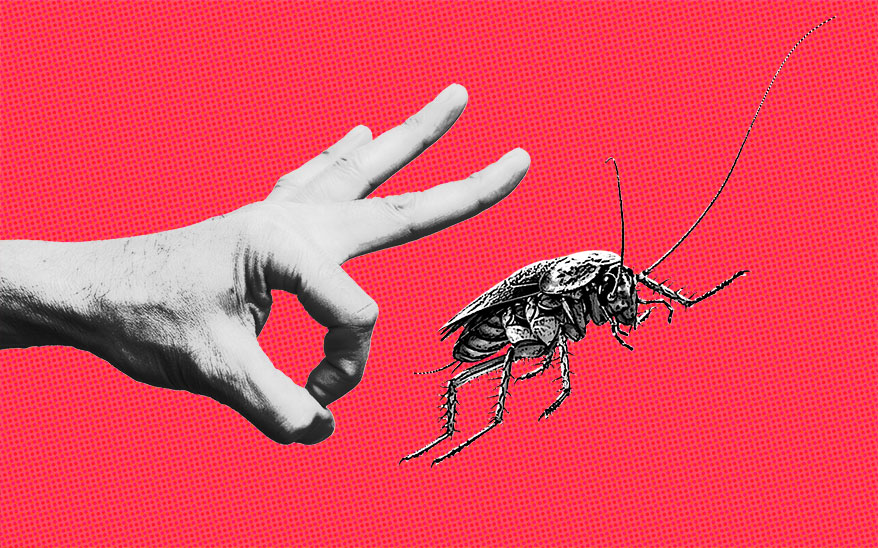 Could You Keep Your Cool if a Roach Joined You in the Exam Room?