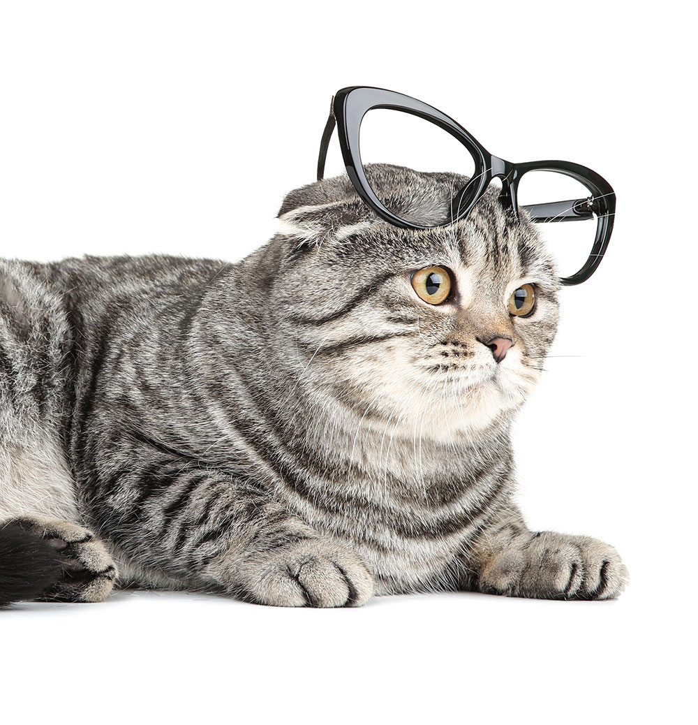 20 Perfect Halloween Costumes for Glasses-Wearers