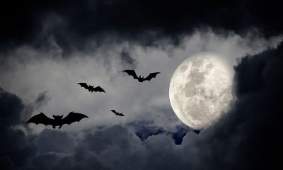 night moon covered with dark clouds